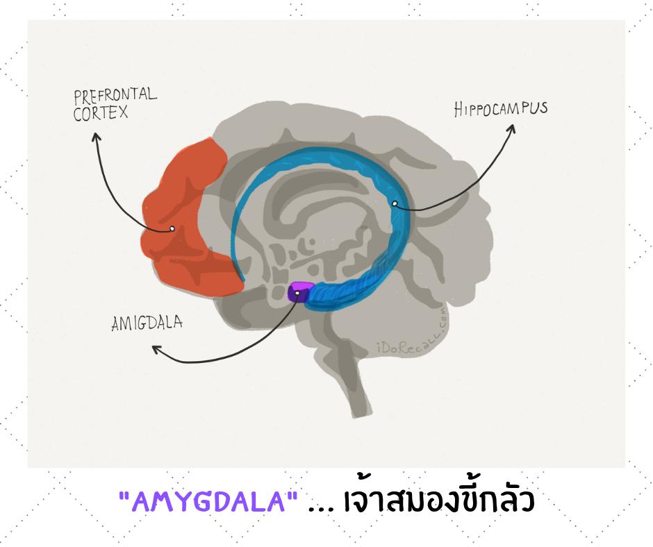 Amygdala … เจ้าสมองขี้กลัว